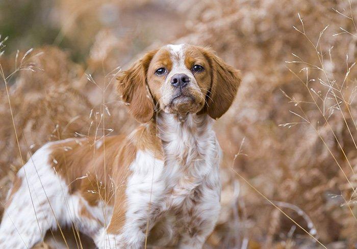 Bien-aimé Fédération Départementale des Chasseurs de l'Isère | Les chiens d  FD36