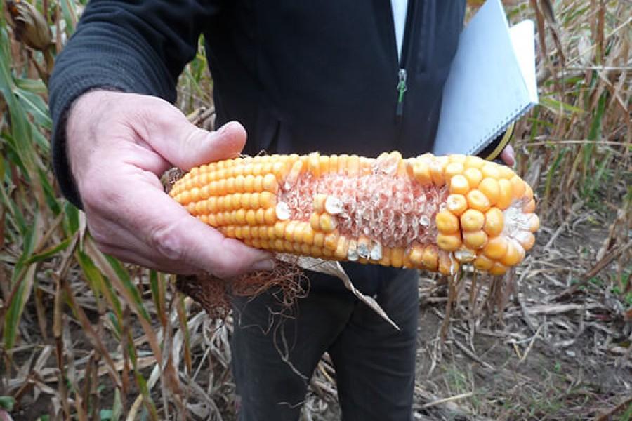 CDCFS Dégâts: des barèmes agricolesà la baisse