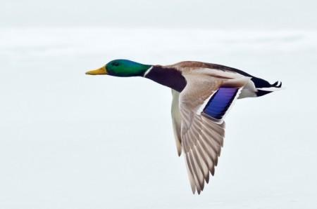 5 chiffres à retenir sur la chasse en Auvergne Rhône-Alpes