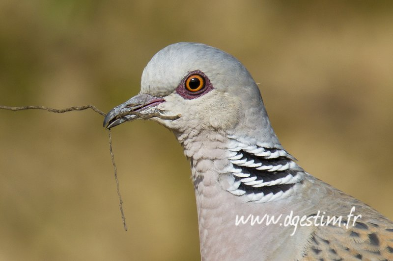 L'arrêté de fermeture des oiseaux migrateurs est désormais disponible