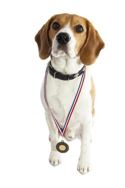 Les concours de chienen résumé