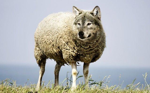 Formation Loup : inscrivez-vous !