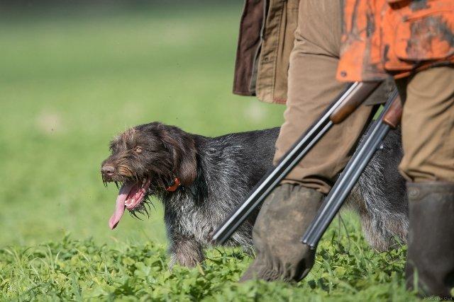 Arrêté préfectoral d'ouverture de la chasse 2018-2019 : un bilan en demi teinte