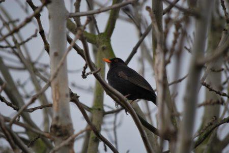 Oiseaux de passage : plus de 30 ans de données fournies par les chasseurs