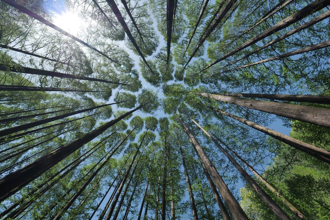 PRFB, ICE: chasseurs-forestiers, tous concernés !