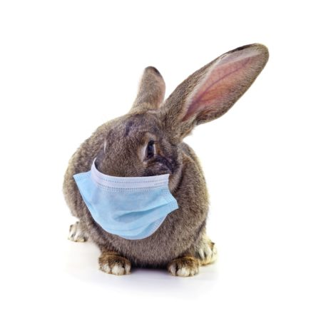 Prévention et gestion des maladies en faune sauvage