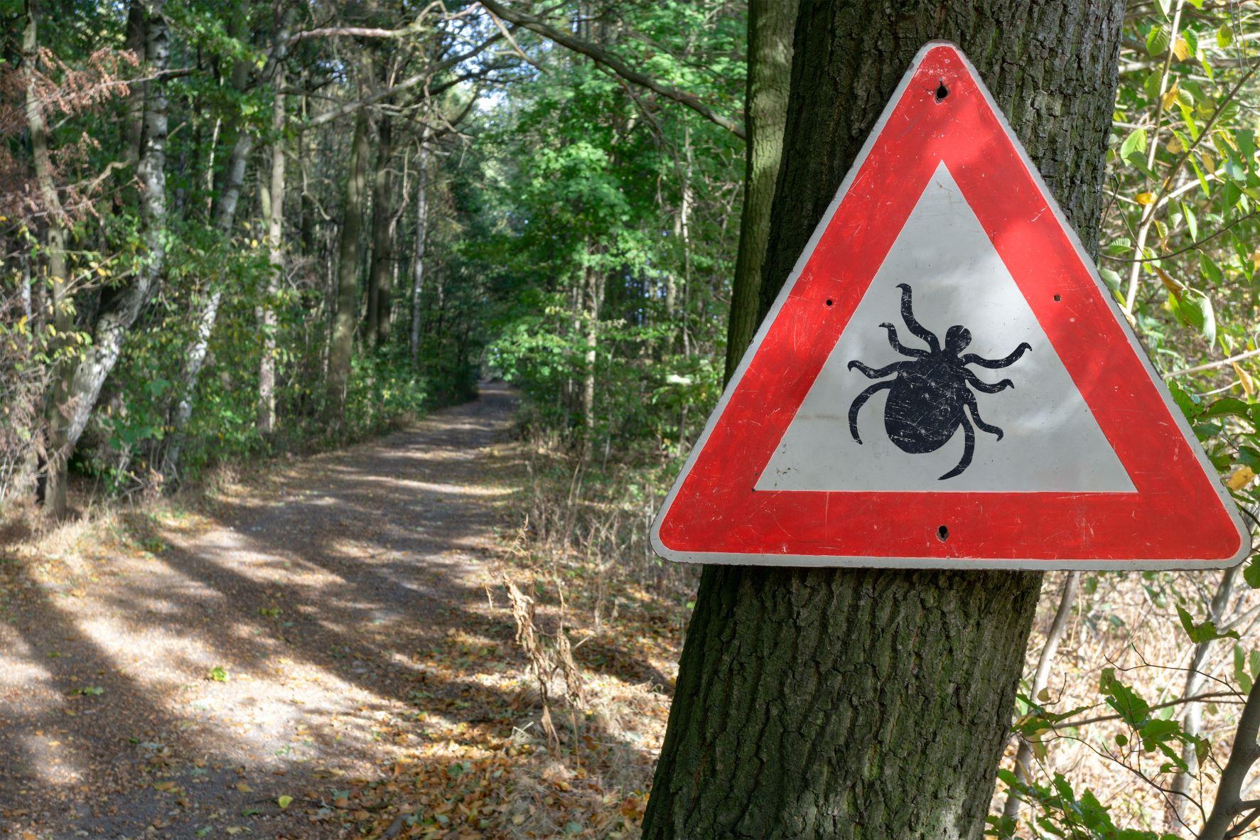 Lyme, une maladie peu connue mais en recrudescence