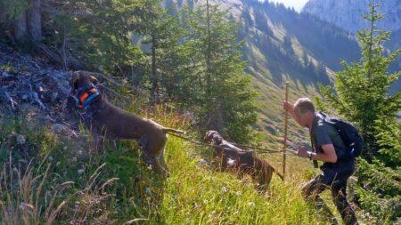 Tétras-lyre, lagopède et bartavelle : une saison blanche pour la chasse dans les Alpes du nord